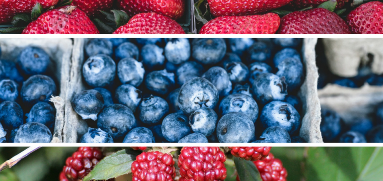 Fit Berries? Trying to eat right but not deprive yourself of a great treat? Berries are the answer!